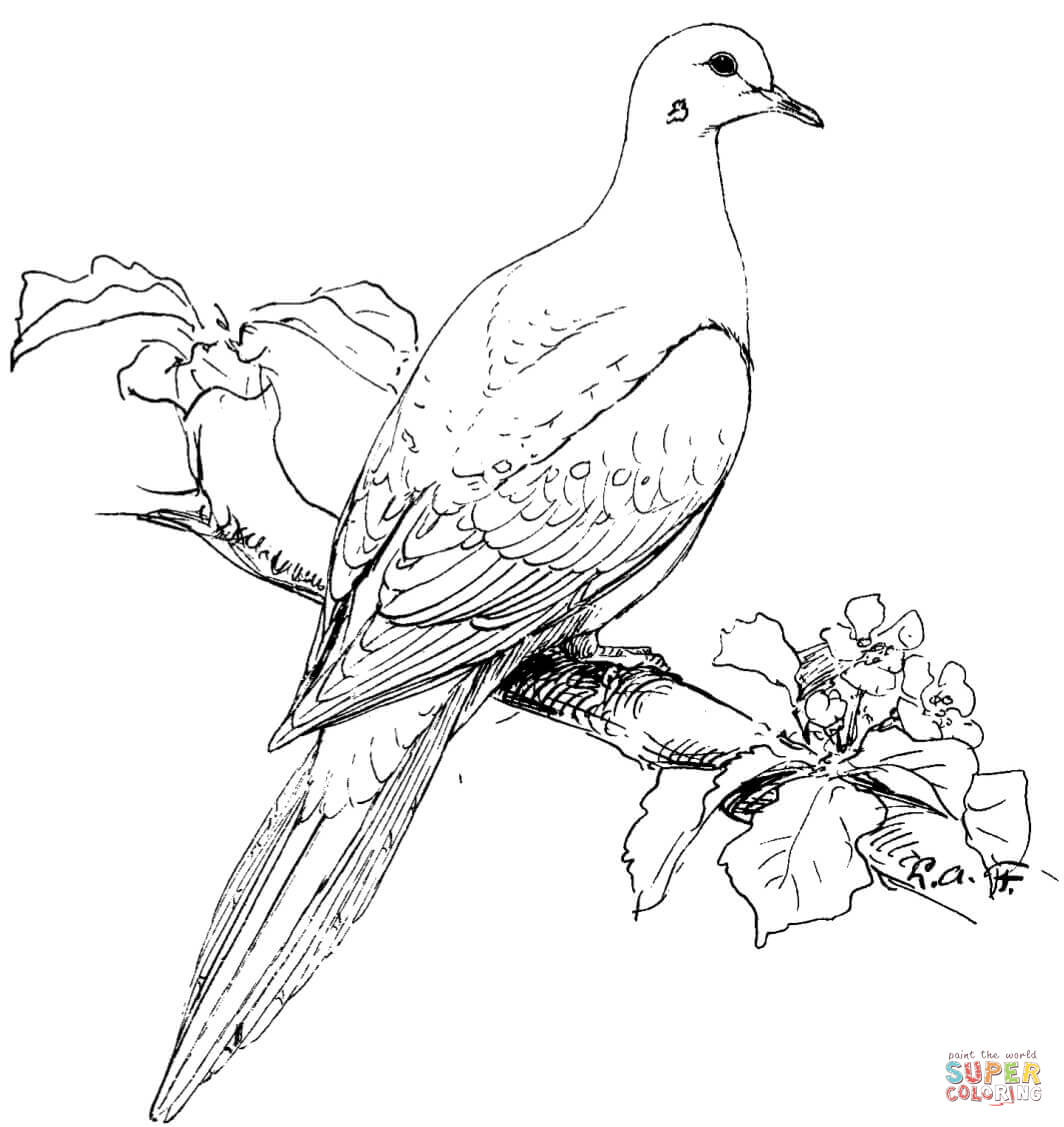 Turtle Dove coloring #7, Download drawings