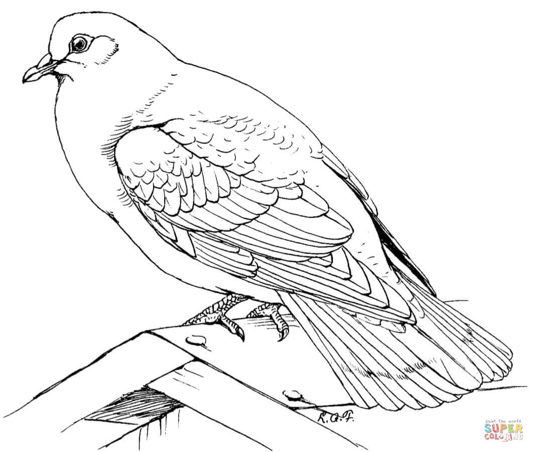 Turtle dove coloring download turtle dove coloring for Turtle dove template