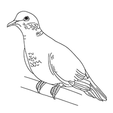 Turtle Dove coloring #1, Download drawings