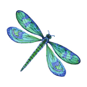 Dragonfly clipart #9, Download drawings