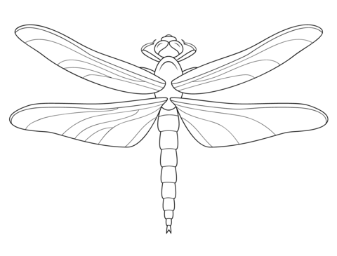 Dragonfly coloring #12, Download drawings