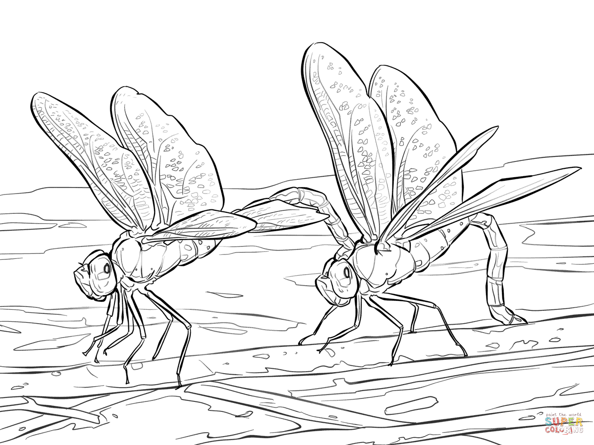 Dragonfly coloring #6, Download drawings