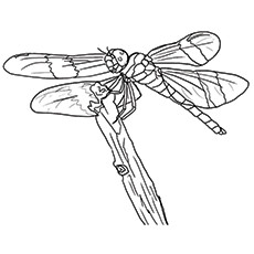 Dragonfly coloring #2, Download drawings