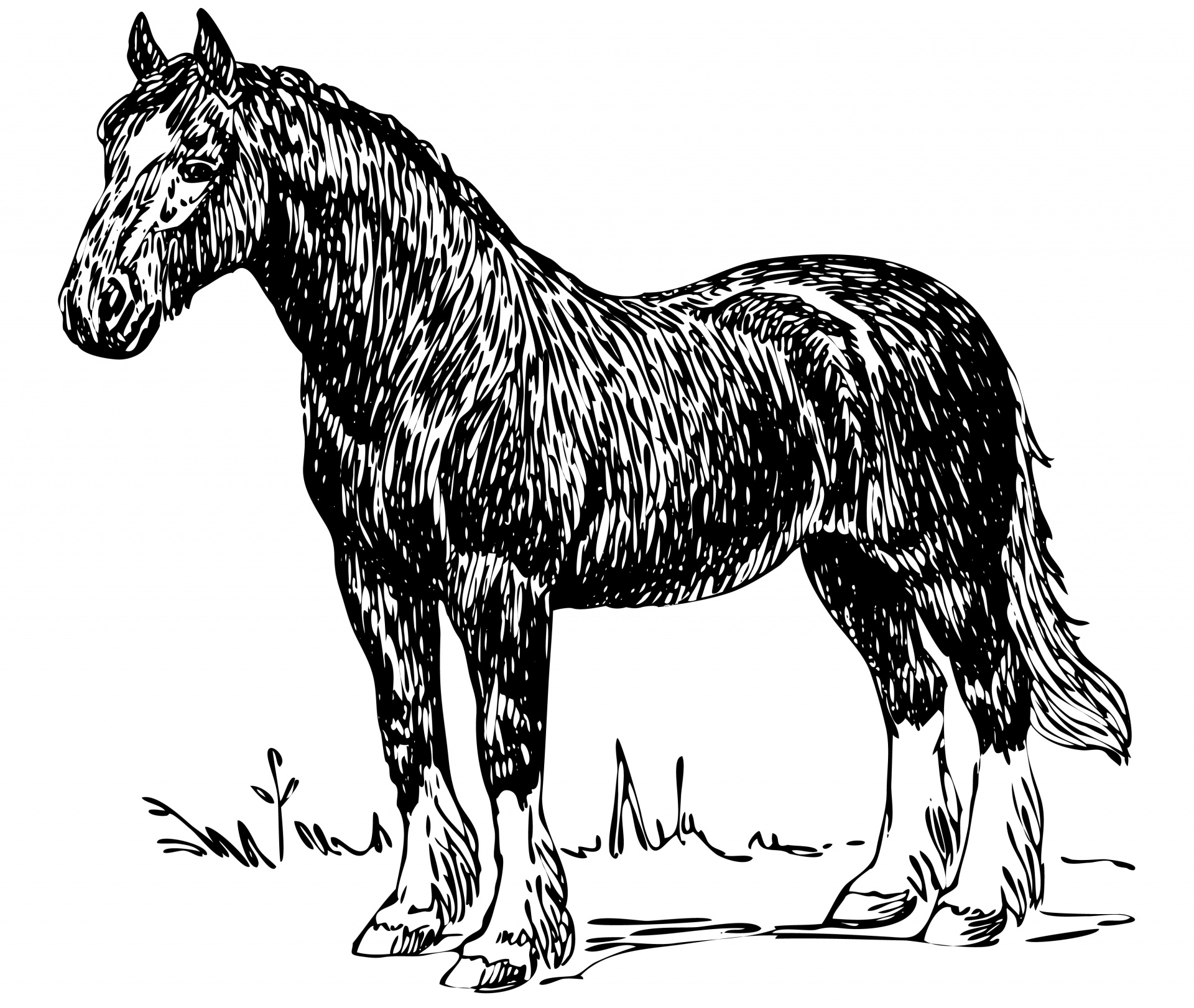 Draught Horse clipart #2, Download drawings