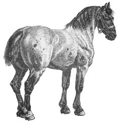 Draught Horse coloring #8, Download drawings