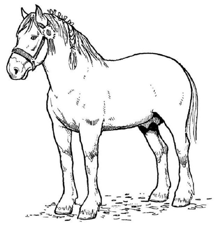 Draught Horse coloring #6, Download drawings
