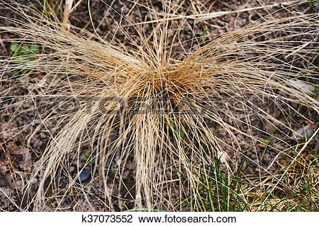 Dry Grass clipart #11, Download drawings