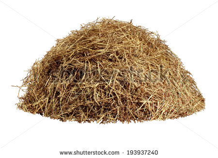 Dry Grass clipart #7, Download drawings