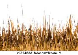 Dry Grass clipart #19, Download drawings