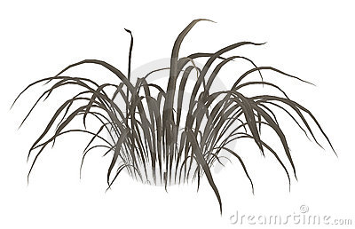Dry Grass clipart #20, Download drawings