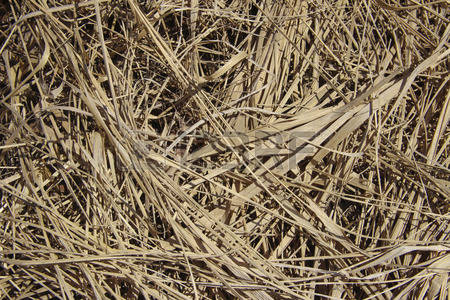 Dry Grass clipart #13, Download drawings