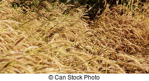 Dry Grass clipart #10, Download drawings