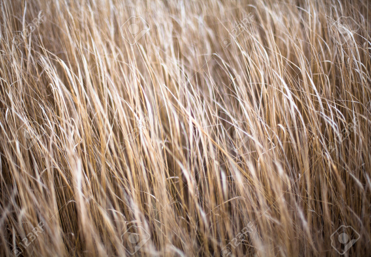 Dry Grass coloring #2, Download drawings