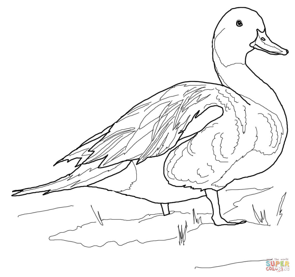Duck coloring #6, Download drawings