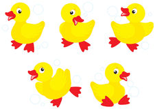 Duckling clipart #6, Download drawings