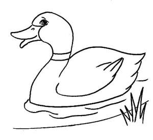 Duckling coloring #5, Download drawings