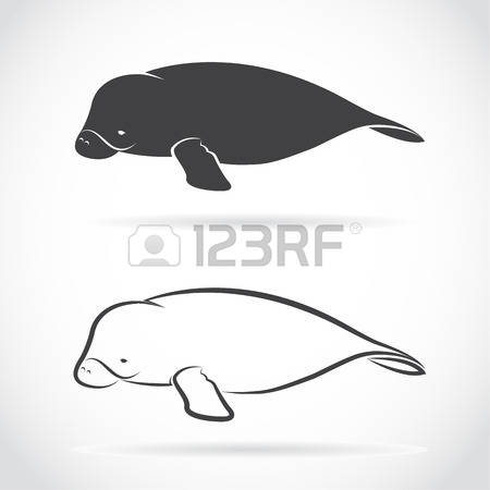 Dugong clipart #4, Download drawings