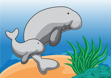 Dugong clipart #17, Download drawings