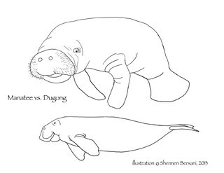 Dugong coloring #11, Download drawings
