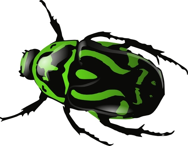 Dung Beetle clipart #18, Download drawings