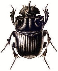 Dung Beetle clipart #3, Download drawings