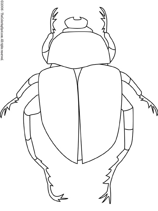 Dung Beetle coloring #4, Download drawings