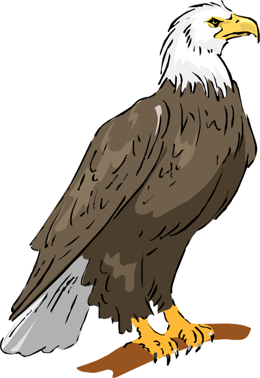 Eagle clipart #3, Download drawings