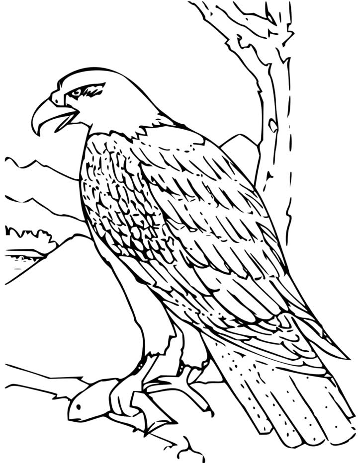 Eagle coloring #9, Download drawings