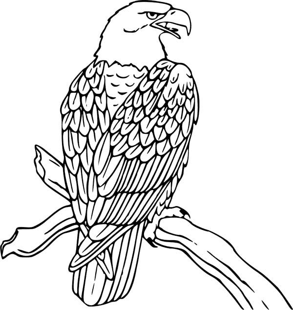 Eagle coloring #15, Download drawings