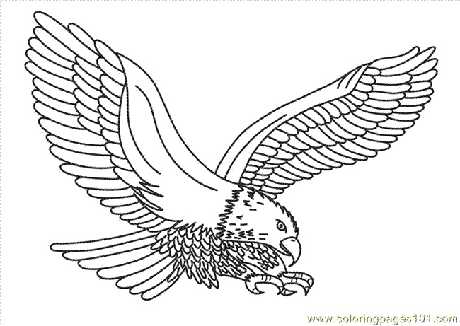 Eagle coloring #11, Download drawings