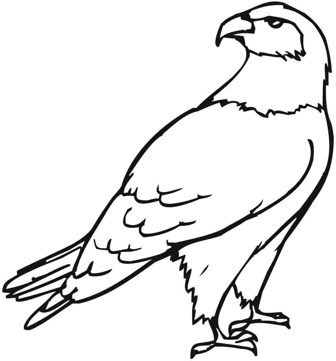 Eagle coloring #1, Download drawings