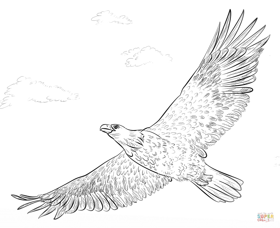 Eagle coloring #12, Download drawings