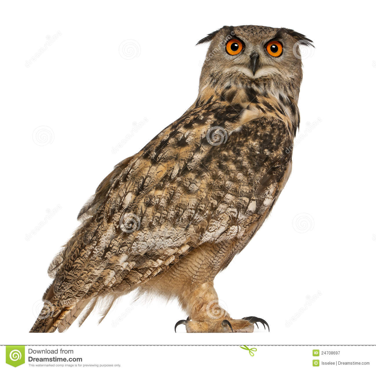 Eagle-owl clipart #6, Download drawings