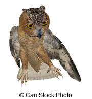 Eagle-owl clipart #12, Download drawings