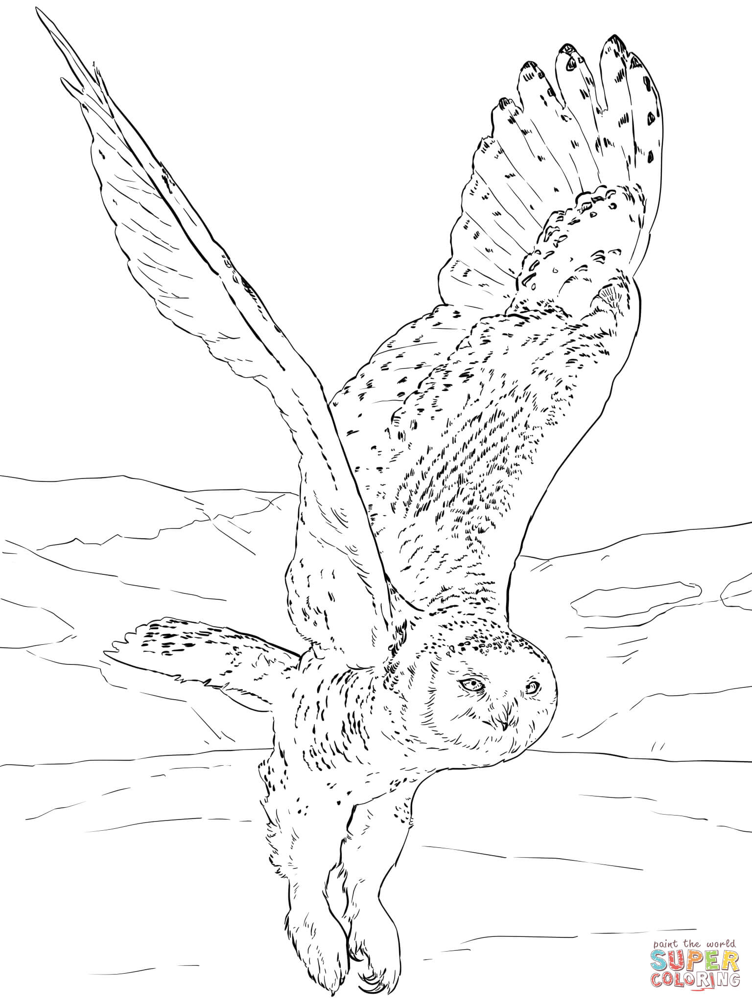 Eagle-owl coloring #2, Download drawings