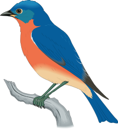 Eastern Bluebird clipart #20, Download drawings