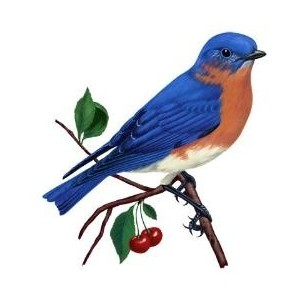 Eastern Bluebird clipart #11, Download drawings