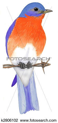 Eastern Bluebird clipart #9, Download drawings