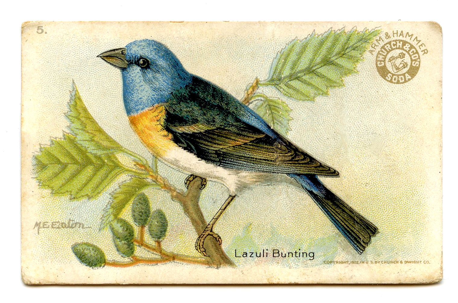 Eastern Bluebird clipart #2, Download drawings