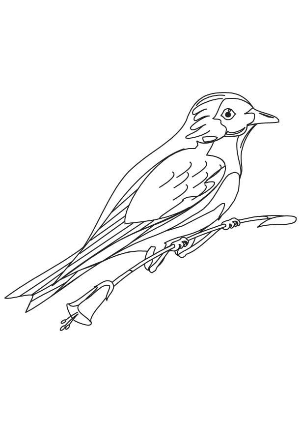 Eastern Bluebird coloring #14, Download drawings