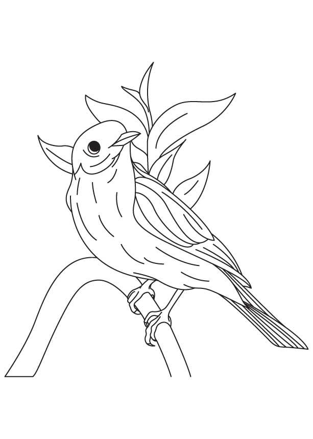 Eastern Bluebird coloring #13, Download drawings