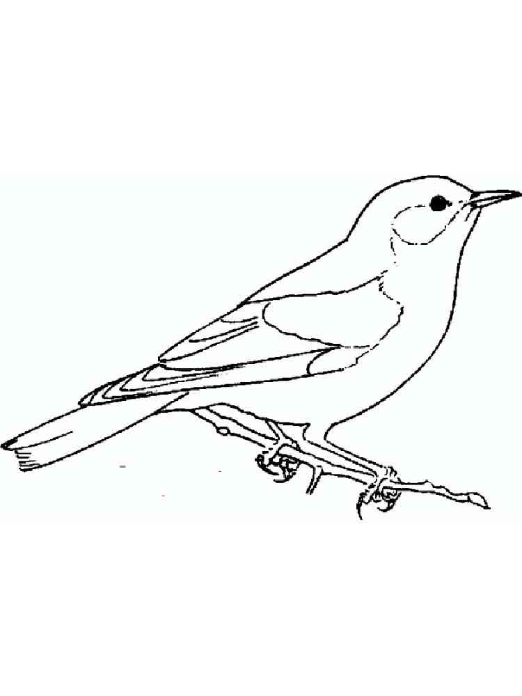 Eastern Bluebird coloring #6, Download drawings