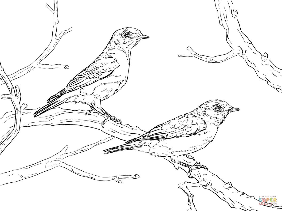 Eastern Bluebird coloring #9, Download drawings
