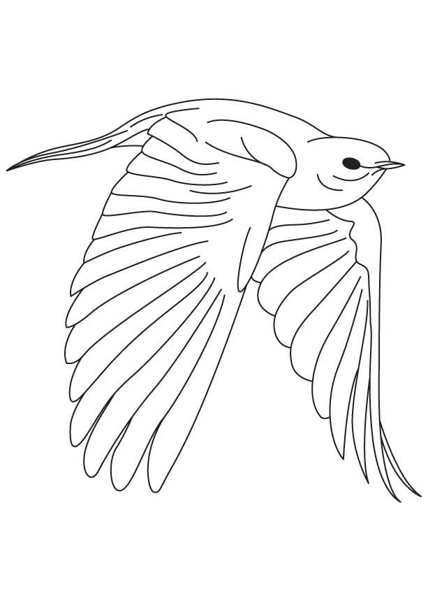 Eastern Bluebird coloring #18, Download drawings