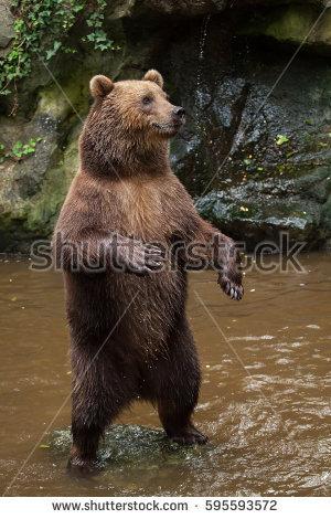 Eastern Brown Bear clipart #14, Download drawings