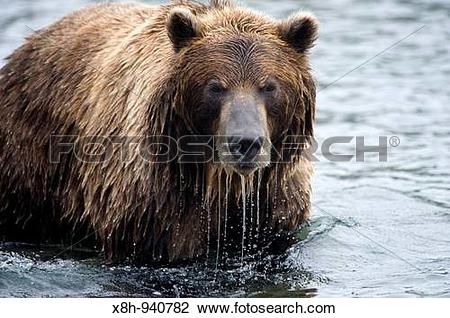 Eastern Brown Bear clipart #19, Download drawings