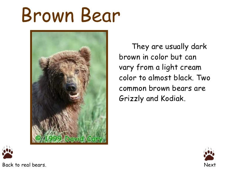 Eastern Brown Bear coloring #9, Download drawings