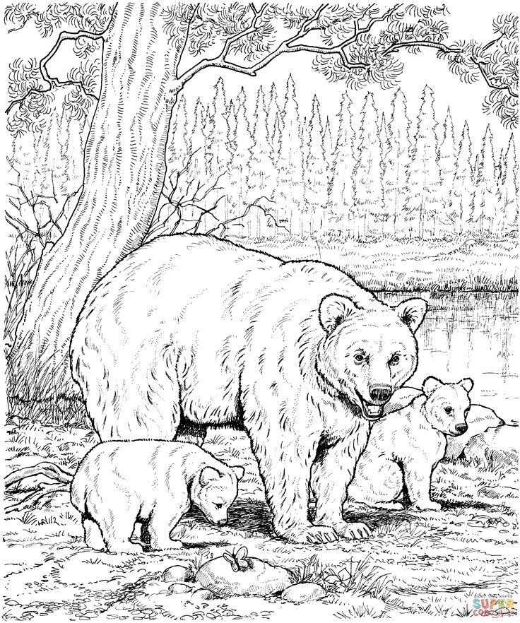 Eastern Brown Bear coloring #8, Download drawings