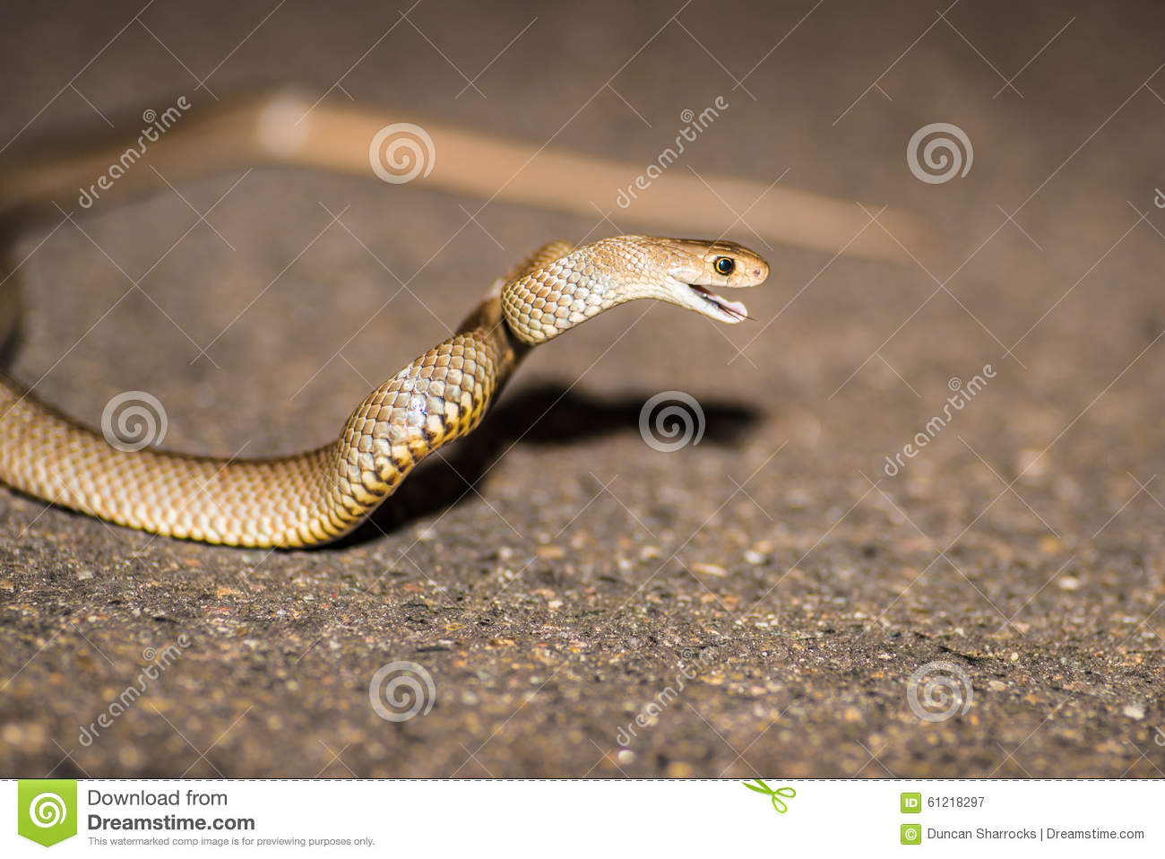 Eastern Brown Snake clipart #20, Download drawings