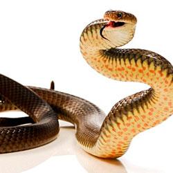 Eastern Brown Snake coloring #5, Download drawings
